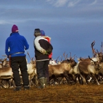Indigenous Sámi Culture and Connection to the Land in Arctic Europe