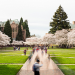 the quad with cherry blossoms